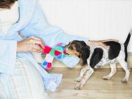 Comment garder les chiens de manger sur des cordons d'alimentation