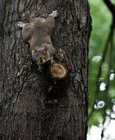 Comment attraper un écureuil sauvage