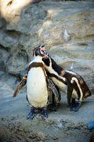 Antarctique animaux Information
