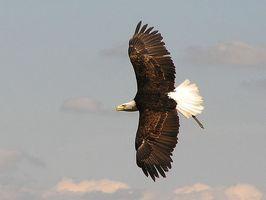 But des plumes de queue d'un oiseau