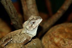 Comment faire des plans de construction pour les cages de reptiles