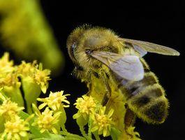 Les parties d'une abeille pour la troisième année