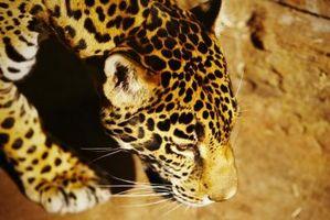 Zoo préscolaire Leçons