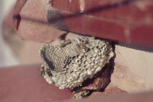 Comment trouver un nid d'abeille