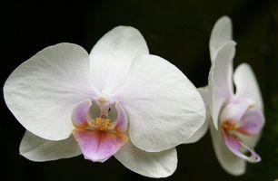Comment faire un Bouquet Orchid
