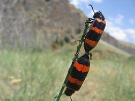 Généralités sur Insectes & Bugs