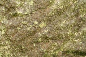 Caractéristiques structurelles des algues bleu-vert