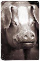 Comment peindre un galvanisé Cochon de Métal
