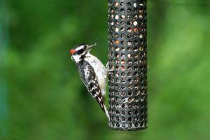 Comment faire pour attirer les oiseaux sauvages dans le Colorado