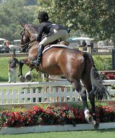Comment mettre en place une grille au travail pour Horse Jumps