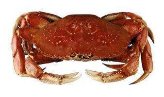 Un guide pour Crabbing à Washington
