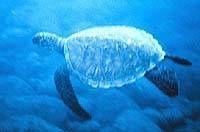 Comment les humains Harm tortues de mer?
