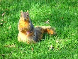 Comment construire un écureuil Maison intérieure