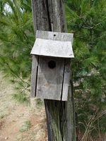 Comment construire des maisons pour oiseaux Oiseaux Michigan