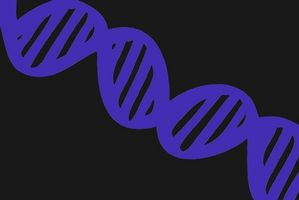 Comment tracer histoire de famille Grâce Test ADN