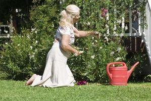 Fleur Jeux Flash