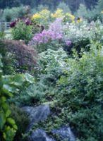 Que dois-Jardin scinques Eat?