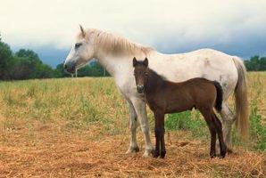 Comment calculer l'intervalle de génération des chevaux