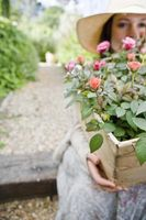 Plantes pour une pendaison de crémaillère