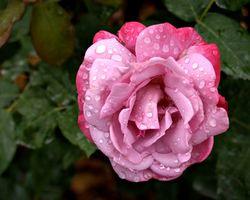Décorations Quinceanera rose Idées