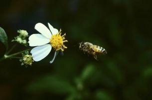 Quelles sont les causes de l'extinction des abeilles?