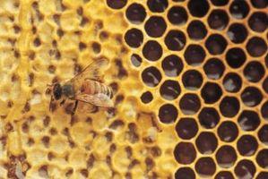 Instruments utilisés sur Wild Honey