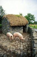 Qu'est-ce qu'un Barrow Hog?