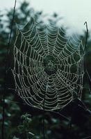 Types d'araignées d'Amérique du Nord