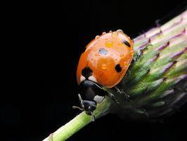 Quoi Insectes aider les agriculteurs?