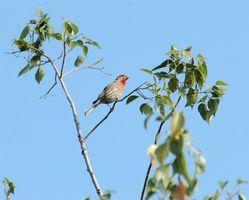 Comment peindre un oiseau dans un arbre