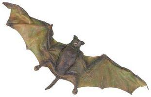 Gris Bat Espèces en danger Faits