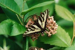 Deux types de cycles de vie des insectes