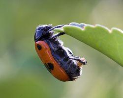 Quels sont les insectes Droppings Appelé?