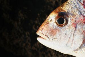 Types poissons réduits