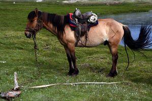 Listes des espèces en voie de disparition des chevaux