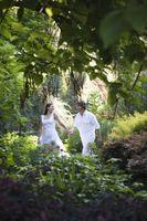 Comment organiser présidents de mariage autour des arbres