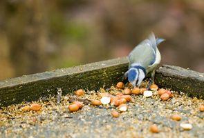 Comment nourrir les oiseaux sauvages dans le nord-