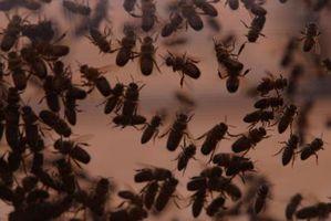 Quelles sont les étapes de base du cycle de vie d'un insecte?