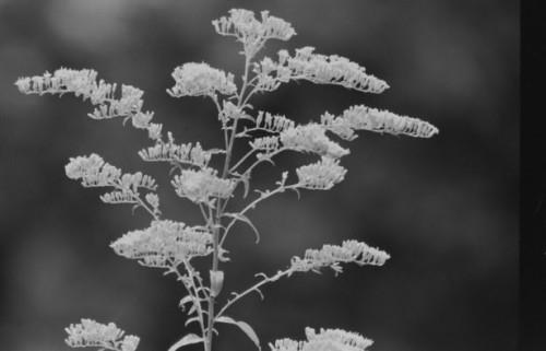 L'utilisation de film noir et blanc