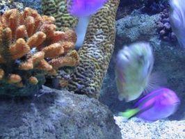 Comment réduire les niveaux de nitrates dans l'eau de mer