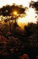 Adaptations nécessaires pour survivre dans la forêt tropicale