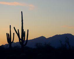 Voyages Fun & Family Day gratuit en Arizona