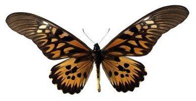 Papillon orange Idées de mariage