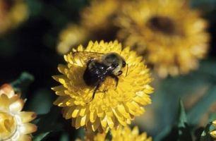 Effets négatifs d'une Bumblebee
