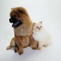 Les grandes activités de groupe sur les chiens et chats de la maternelle