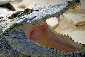 Les types de reptiles au Vietnam