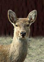 Deer Hunting Jeux que vous pouvez jouer