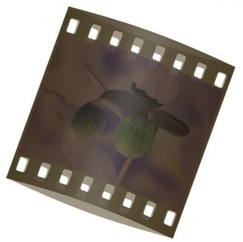 Comment faire pour convertir négatifs en photos numériques