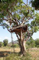 Maison maisons dans les arbres