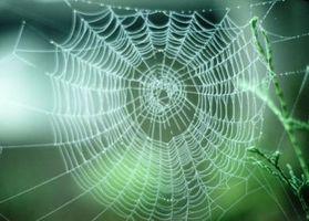 Brown araignées qui sont indigènes au Michigan